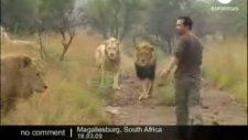 aslanlarla oyun oynayan adam deli bu adam