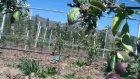 Fida Tarım Tam Bodur Elma Bahçeleri