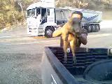 ürkmezde domuz yavrusu yakaladim...!!!