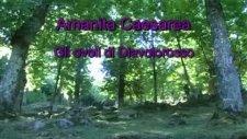 amanita caesarea - sezar mantarı - imparator mantarı