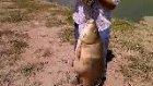 18 kg sazan 2