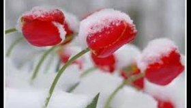 Seçil - Her Yerde Kar Var