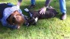 Kalp Masajı İle Köpeğin Hayatını Kurtarıyor