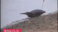 akıllı kuşun balık tutma tekniği