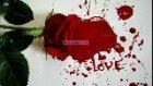 Genç Aşık