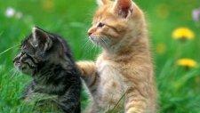 İki Dost