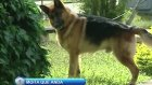 köpeklere yapılan kamera şakası [xd]