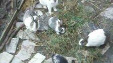 hayvan dostlarım 7 temmuz