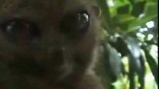 omg cat meets the dramatic lemur