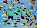 Musa Eroglu-Telli Turnam