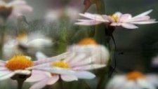 Cengiz Haydın Anna İçin Bir Şarkı Paul Mauriat