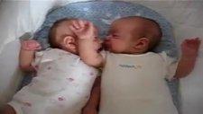 Birisi Uyumaya Çalışıyor Diğeri İse Acıkmış Kardeşinin Burnunu Emmeye Çalışıyor