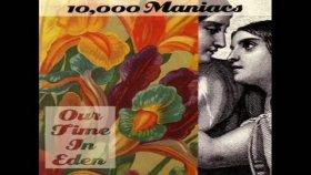 10000 manıacs - Noah's Dove