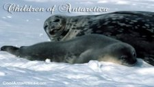 Children Of Antarctica  Relaxation Music By Mary Hession