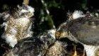 atmaca kuşları