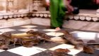 hindistan-bikaner- karnimata fare tapınağı