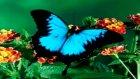 allah'ın muhteşem yaratma sanatı kelebekler