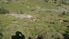 Mov02972 Coni Keklik Kapma