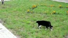 büyük kapışma kedi köpek düellosu