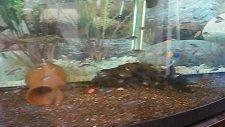 kafalı yunus yavruları