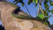 uçan yılanlar