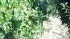 Tombak Köyü Tanıtım Videosu 3