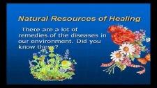 natural resourtces of healing şifa kaynağı bitkiler