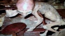 creature found in Mexico