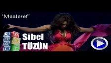 Sibel Tüzün - Malesaf - [2011]