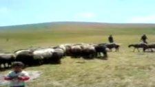 İğdir Güllüce Köyü Yayla