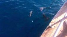 Kuşadası Ali Kaptan 2 Teknesi İle Kalamar Avı