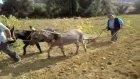 Başlamış Köyü Konya Patates Söküm Video