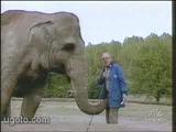 çapkın fil