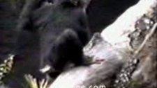 sakar maymun