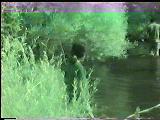 Kangal Bektaş Köyü Değirmenli Balık Avı 1999