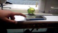 telefona sahiplenen muhabbet kuşu