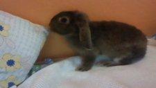 this maniac rabbit