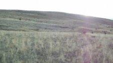 lusi lady çil ferma