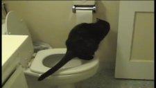kedi ve tuvalet