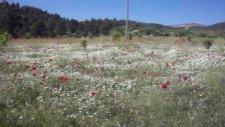 Mersin Alanyalı Köyü 30.05.2010.alanyalı Köyü Çakmak Ahmet Orlunun Çiftliğinden Doğa Manzaraları