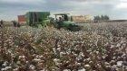 john deere 7260 pamuk toplama makinası