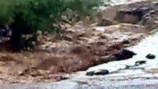 Karakoçan  Altınoluk Köyün De Sel