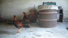 horozcu hasan fehmi-2011 kasım 3