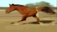 iki ayaklı at