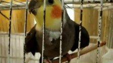 Tıklanma Rekoru Kıran Konuşan Papağan