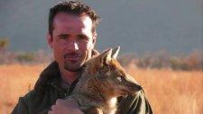 kevin richardson lion whisperer  [new].wmv