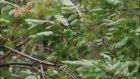 bahçada yeşil çinar nanay - gazel kardeş türküler