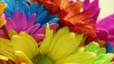 Sordum Sarı Çiçeğe İlahi