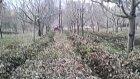 Kubota B2530 Elma Bahçesi 2
