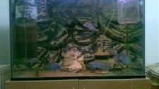 malawi yunus